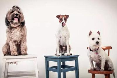 带上狗狗克服社交障碍:宠物带给我们的好处超乎想象
