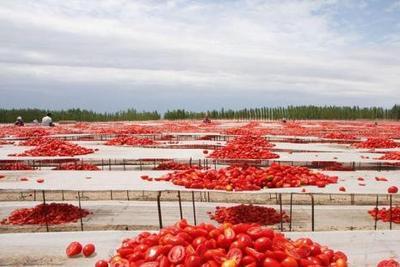 世界日报:成年人每天吃2个番茄可增强肺功能
