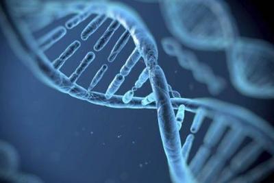 """基因""""魔剪""""成功灭活HIV基因 或带来根治艾滋病新疗法"""