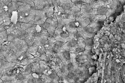 意外!研究称世界最古老皮屑竟出现在有羽恐龙身体上