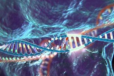 """""""基因魔剪""""安全性再遇挫折:编辑成功或增加患癌风险"""