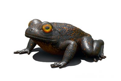 """1亿年前琥珀中发现蛙类新物种:""""琥珀蛙""""体型娇小"""