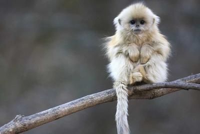 猕猴学会嵌套性语法结构 动物也能掌握复杂规则!