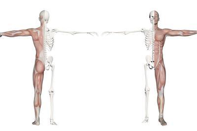 新型骨骼工程技术有望用于个性化移植