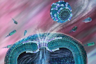 人类和细菌间的军备竞赛:新型抗生素为何如此难寻?