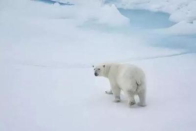 32℃!北极圈附近到底应该什么样?