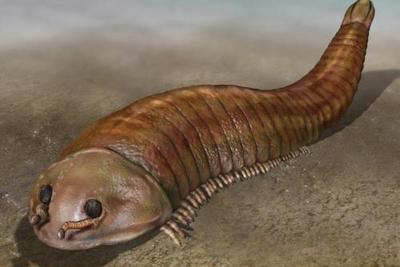 寒武纪抚仙湖虫类再现真节肢类祖先形态