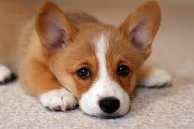 狗如何被驯化成宠物?科学家带你重温狗的驯化史