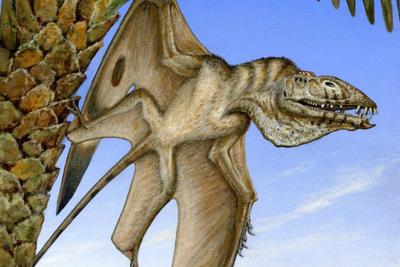 美国犹他州发现有史以来最古老的飞行爬行动物化石