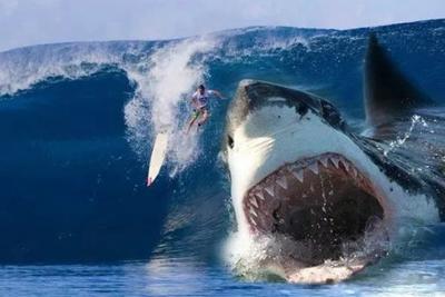 """巨齿鲨是虚构的,而这个""""海洋杀手""""是真的存在"""