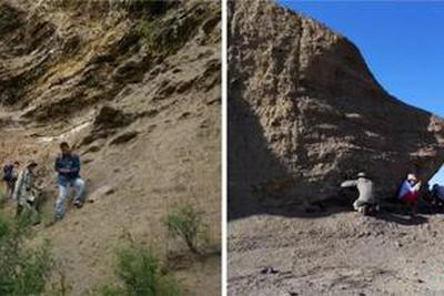 """这些毫米级昆虫化石:反映中生代湖泊经历的""""大革命"""""""