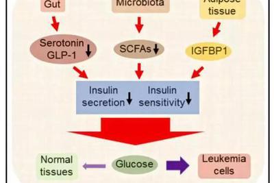 欺骗脂肪细胞 挟持肠道菌群 为了作恶癌细胞也是蛮拼