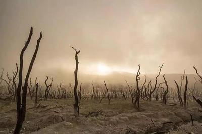 若世纪灾难重演,人类能否拯救自己?