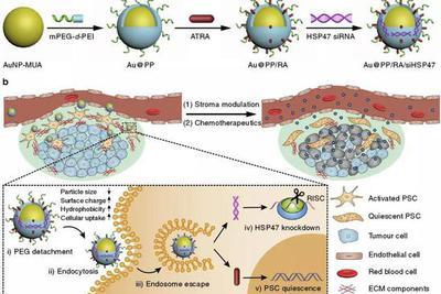 """不能直接清除胰腺癌细胞 但是科学家可让""""改邪归正"""""""
