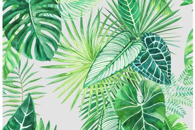 棕榈叶片化石将青藏高原抬升史推后千万年