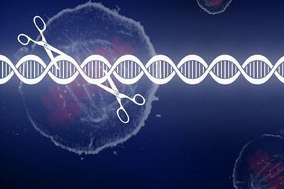 韩春雨的基因剪刀又复活了?