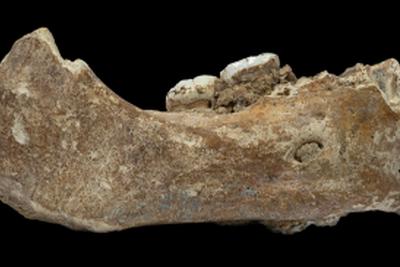 青藏高原上16万年前下颌骨或将重写东亚古人类演化史