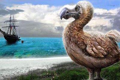 如果灭绝物种能复活,你会选择哪种动物做宠物?