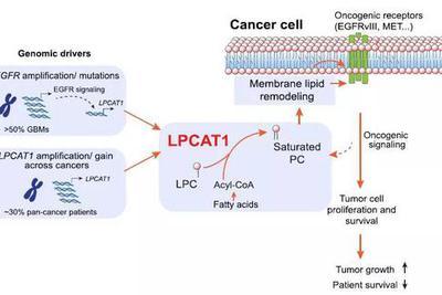 显著抑制恶性肿瘤生长,新靶点?#22411;?#27835;疗数十种癌症