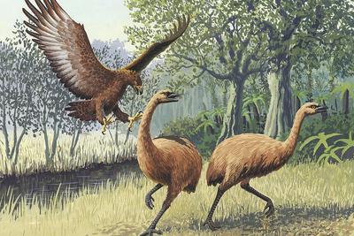新西兰男子河边遛狗时意外发现灭绝恐鸟足迹