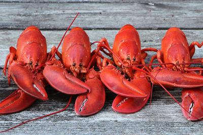 龙虾煮熟了为什么会变成红色?_绵阳网赚论坛