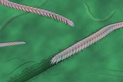 这条虫子的出现,是动物早期演化史的巨大飞跃