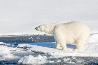 """地球""""好日子""""只剩11年?全球变暖加剧,人类未来堪忧"""