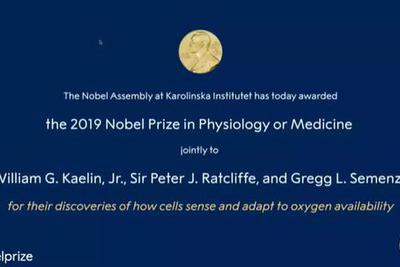 """诺贝尔生理学或医学奖""""细胞感知氧气通路""""摘得桂冠"""