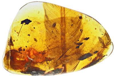 亿年前凶猛古鸟类被发现:体型很小 可爱且凶猛