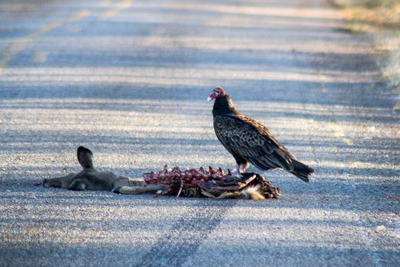 道路上那些被车辆撞死的动物能吃吗?