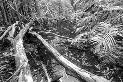"""亚马孙雨林缩减等临界点迫近 地球或进入""""紧急状态"""""""