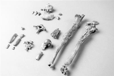 千万年前猿类化石带来人类直立行走新线索