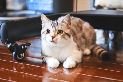 小小宠物撬动千亿级产业 家电企业有哪些新玩法?