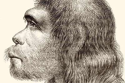 科学家培育含尼安德特人基因大脑:揭晓大脑如何变化