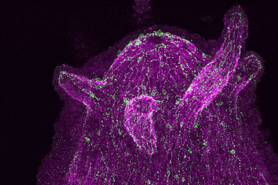 PNAS:神经系统能控制体内的微生物?