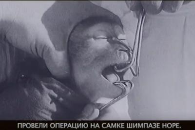 人猿杂交:一段苏联科研往事