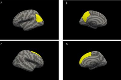 研究发现与意志品质相关的关键大脑结构组织