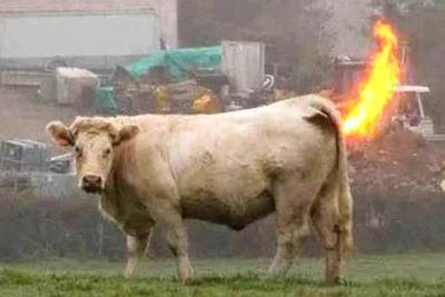 动物会爆炸?危急时刻开启的自杀性防御机制