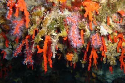 珊瑚还能像种树一样种出来?