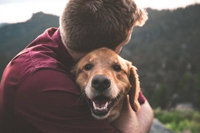 靠养猫养狗年入百万:宠物博主是门怎样的生意?|红像