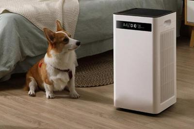 """""""空气健康""""热度不减 室内空气净化选对产品很重要"""