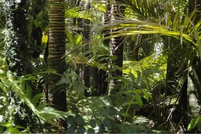 毁灭恐龙的小行星,创造了亚马孙雨林