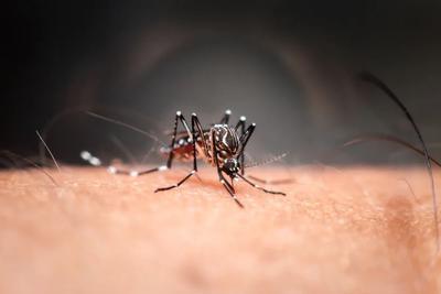 """和烦人的蚊子说""""拜拜""""!华人团队揭秘驱蚊剂的防蚊原理"""