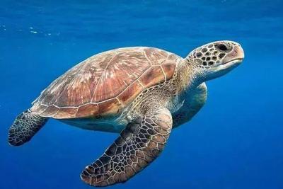 水栖动物如何实现水下导航?