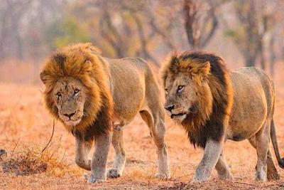 为啥动物界的雄性都比雌性好看?