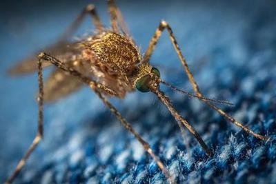 夏日恐怖故事:蚊子叮一口,外来DNA就能转移到人体内?