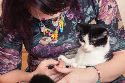 此时,有多少猫咪在吃抗焦虑/抗抑郁药物?