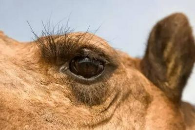 破案了!天生睫毛精是因为基因发生了突变