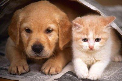 警方回应上海近百个宠物快递盲盒被遗弃路边:全部找到爱心人士收养