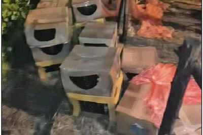 宠物盲盒乱象是无序宠物交易的缩影